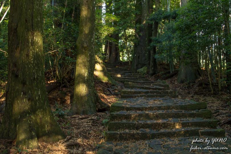 和歌山・早朝の熊野古道3