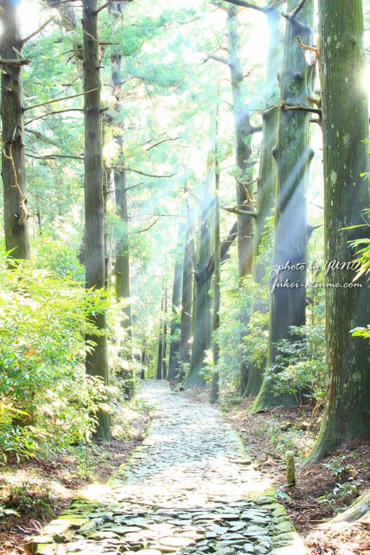 和歌山・早朝の熊野古道1 光芒