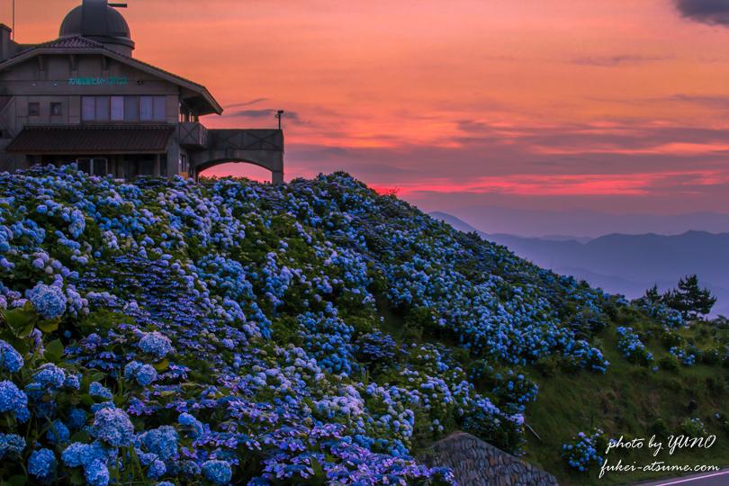 徳島・大川原高原の夕焼けと紫陽花1