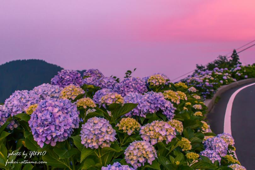 徳島・大川原高原の夕焼けと紫陽花3