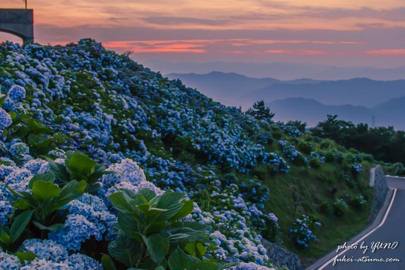 徳島・大川原高原の夕焼けと紫陽花2
