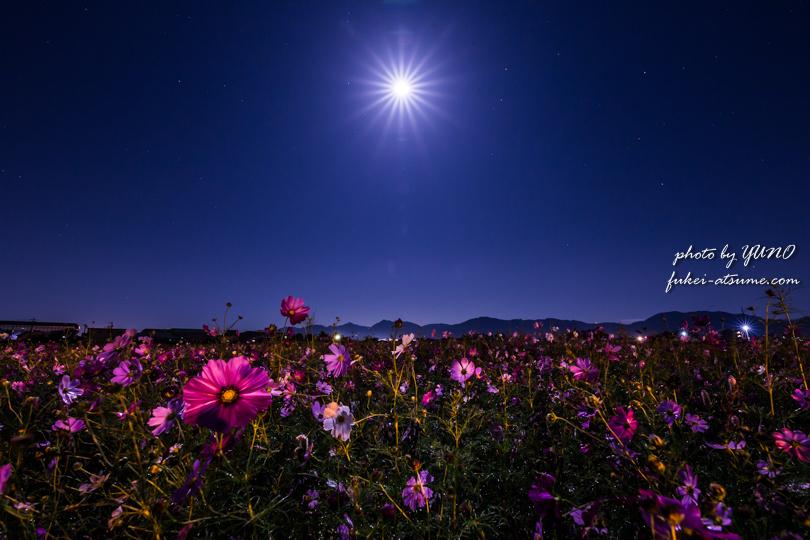 コスモス・満月・月光