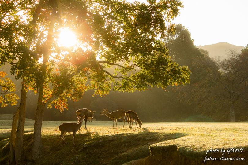 奈良公園・紅葉・鹿1