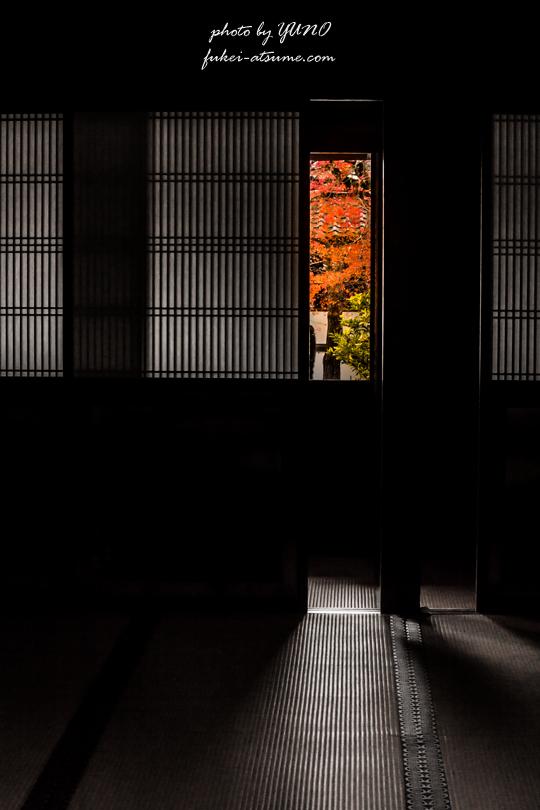 京都・紅葉・追憶の扉