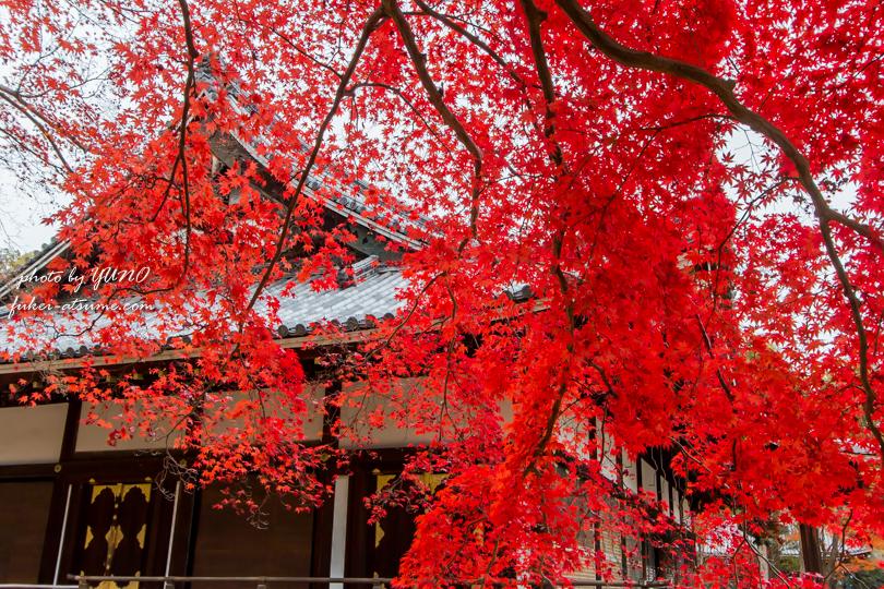 京都・仁和寺・紅葉3