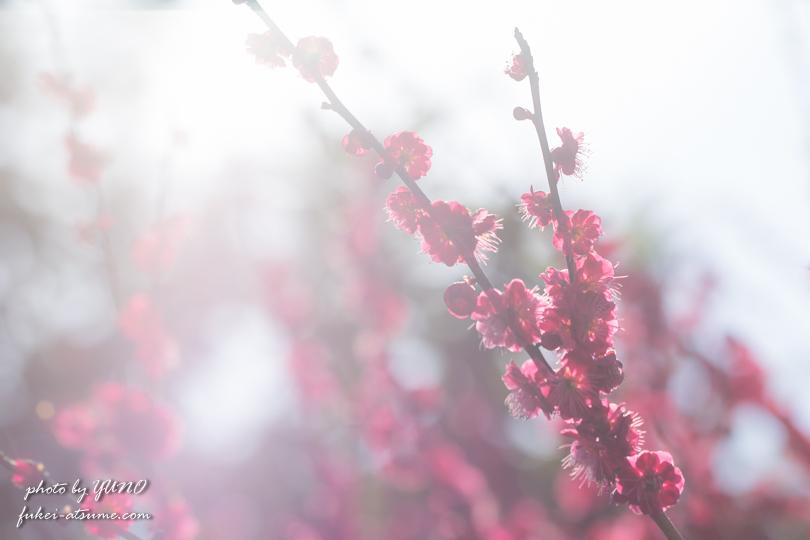 光の春・梅・風景