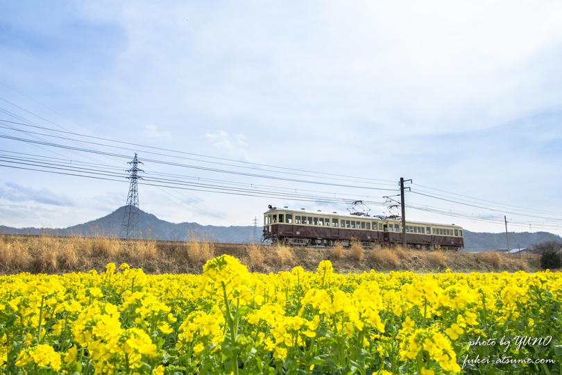 【香川】ことでんレトロ電車と菜の花畑・琴電琴平線