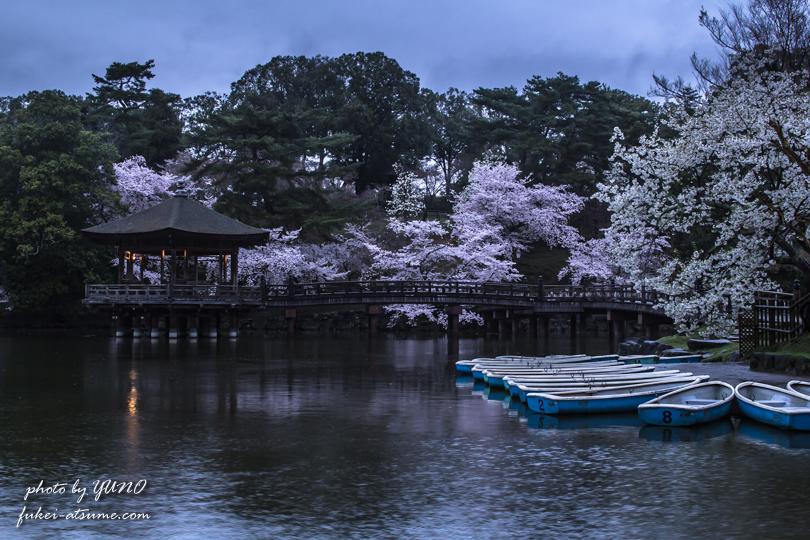 奈良公園・浮見堂・桜・早朝・雨