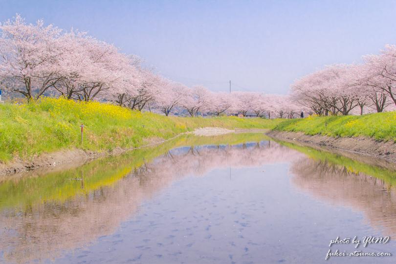 福岡県朝倉郡筑前町・草場川の桜並木撮影1
