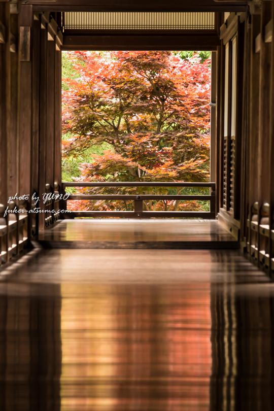 奈良・長谷寺・猩々野村の紅葉
