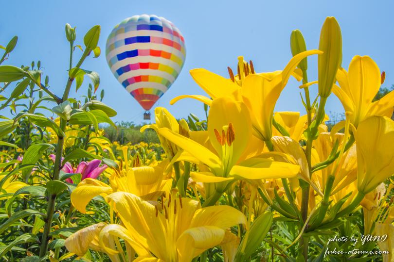 第5回舞洲ゆり園フォトコンテスト・大賞・気球に乗って