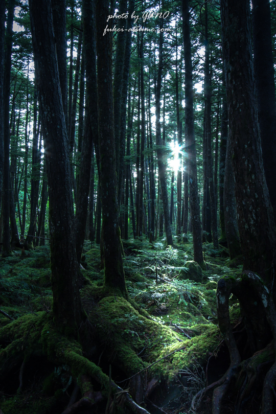 長野・白駒池・苔の森・蓼科・寂光