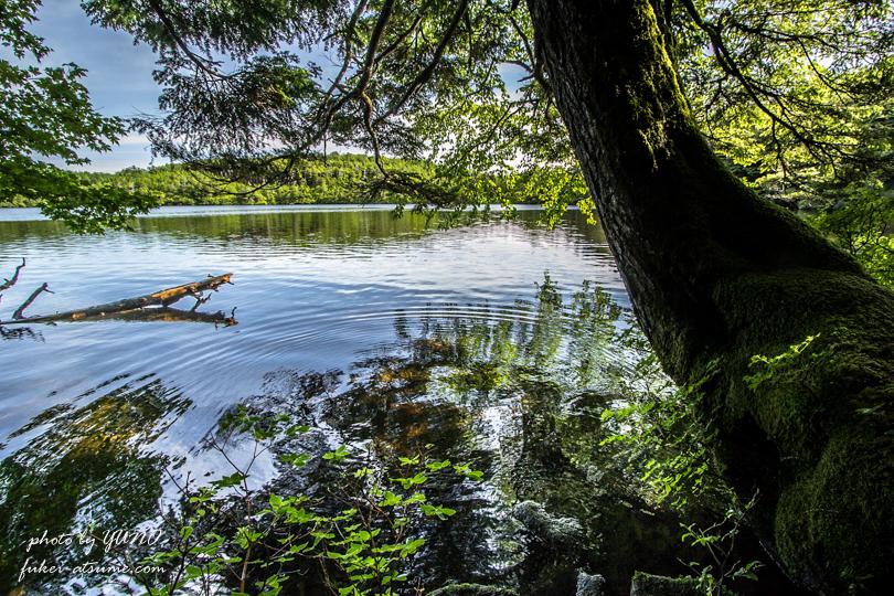 長野・白駒の池・苔の森・蓼科