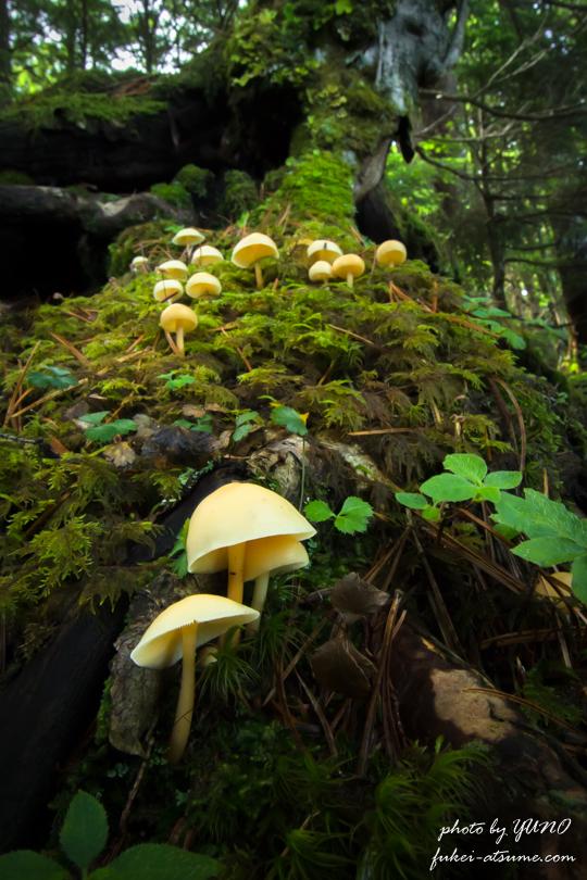 マクロ撮影・苔の森・きのこ・森の小さな住人たち