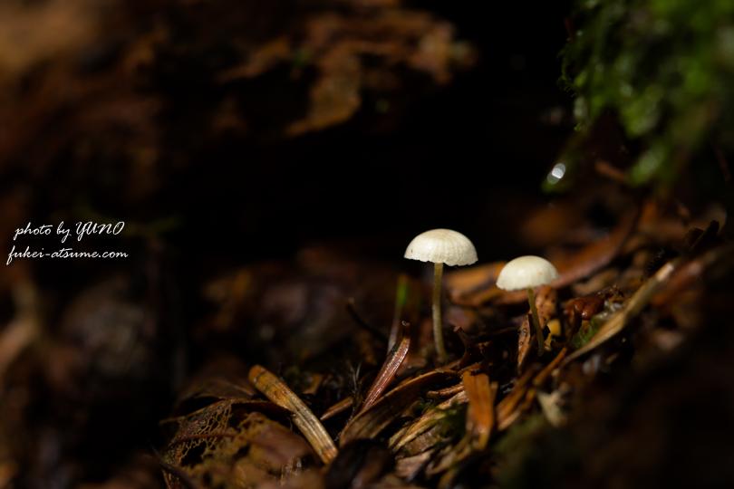 マクロ撮影・苔の森・きのこ・森の小さな住人たち1