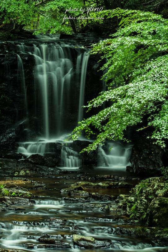 徳島・黒沢湿原・たびの尻滝・夏