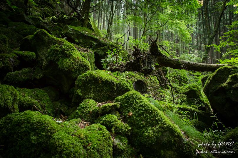 奈良・曾爾村・伊賀見不動滝・美しい苔の世界