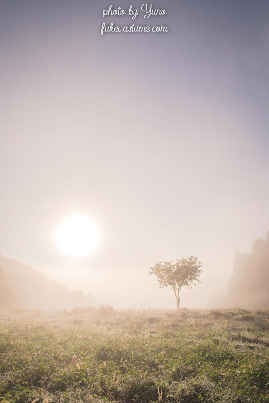 奈良・霧の朝・太陽・霞・早朝・心象風景・光の世界