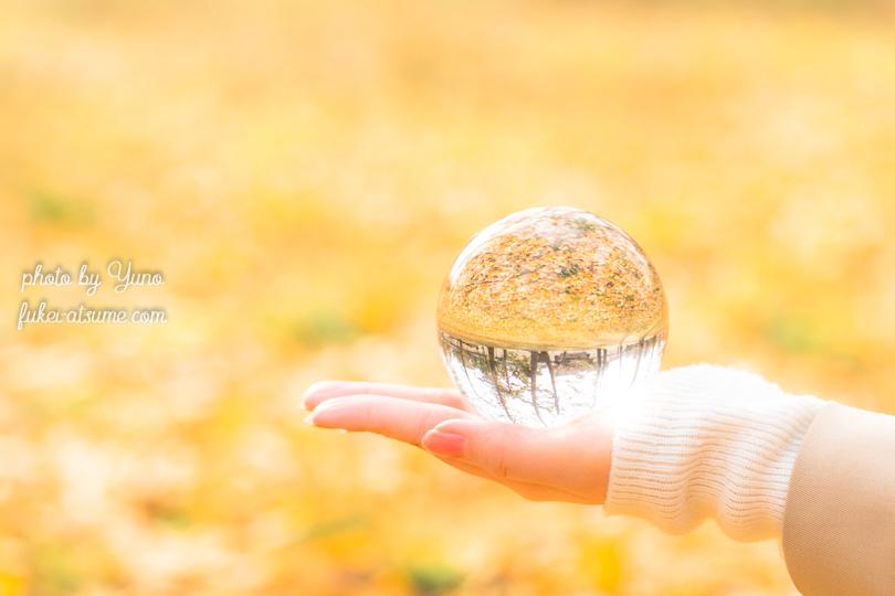 紅葉・人物撮影・ポートレート・京都御苑・イチョウ・黄色の絨毯・水晶玉撮影・ガラス玉撮影