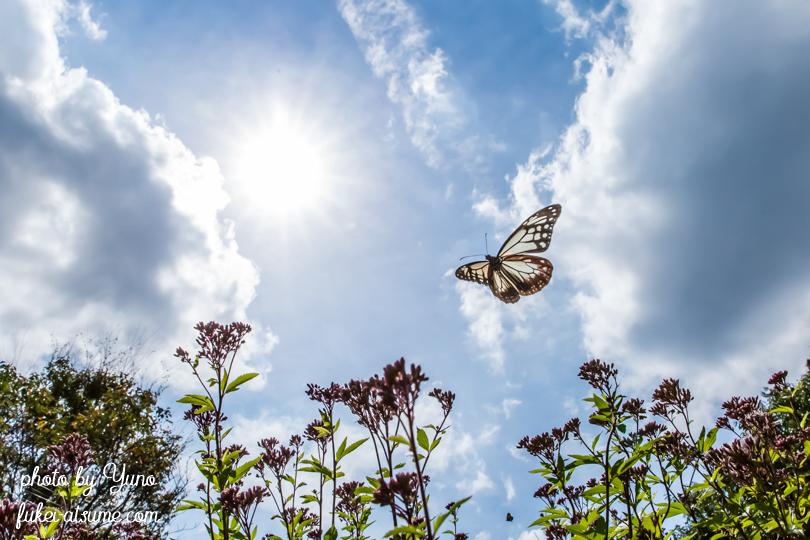 第11回(平成30年度)野生動物写真コンテスト・入選・飛翔