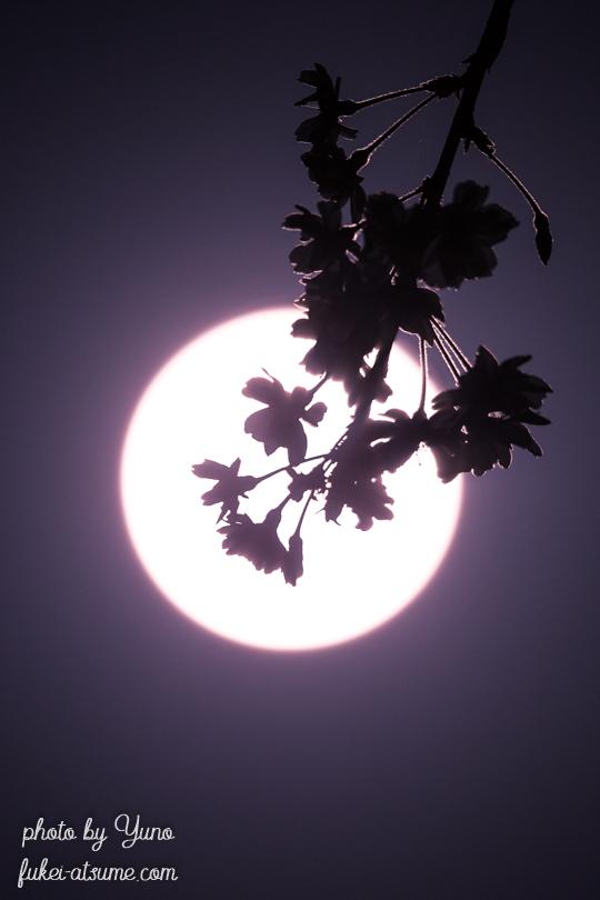 月見桜・桜月夜・花残月・満月・ピンクムーン・春
