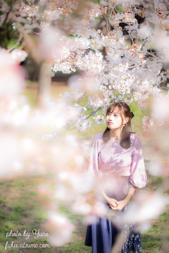 ポートレート・桜2