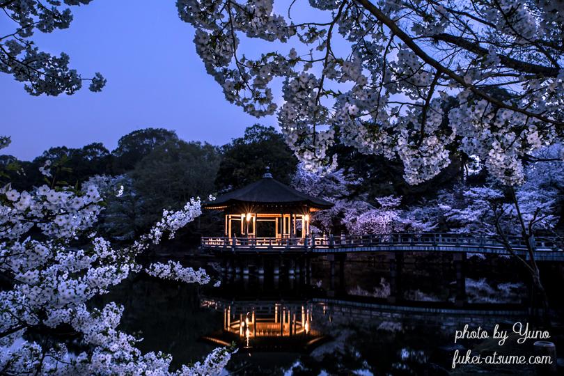 奈良公園・浮見堂・夜明け前・桜・春2