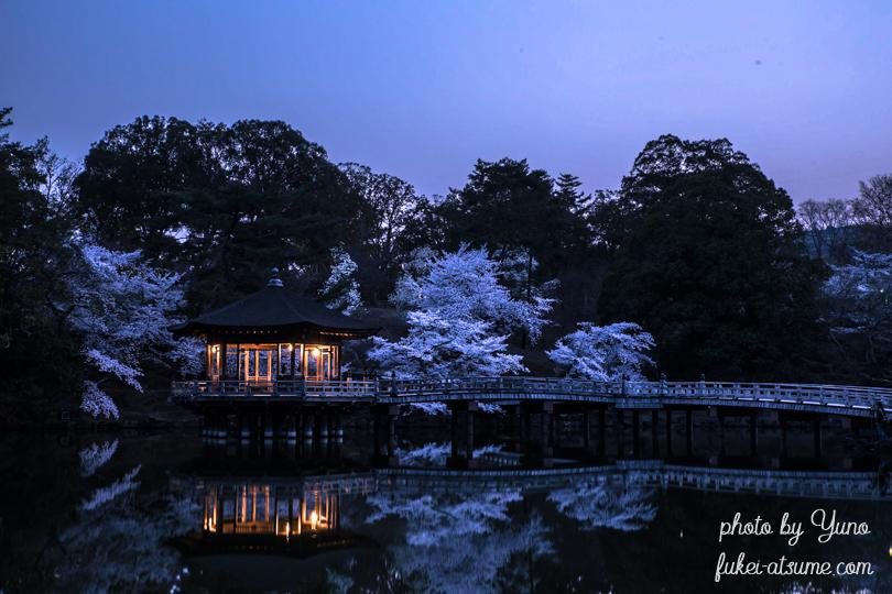 奈良公園・浮見堂・夜明け前・桜・春3
