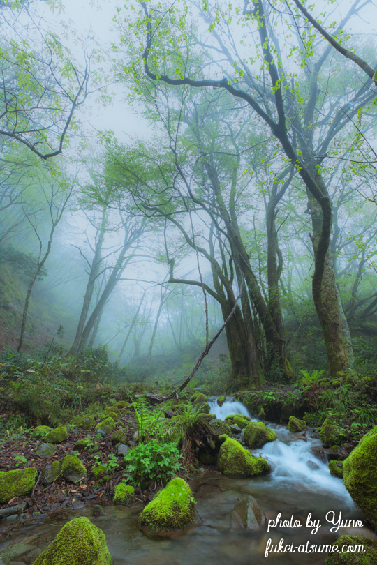 鳥取県江府町・奥大山・木谷沢渓流・霧・渓谷・奥大山の天然水2
