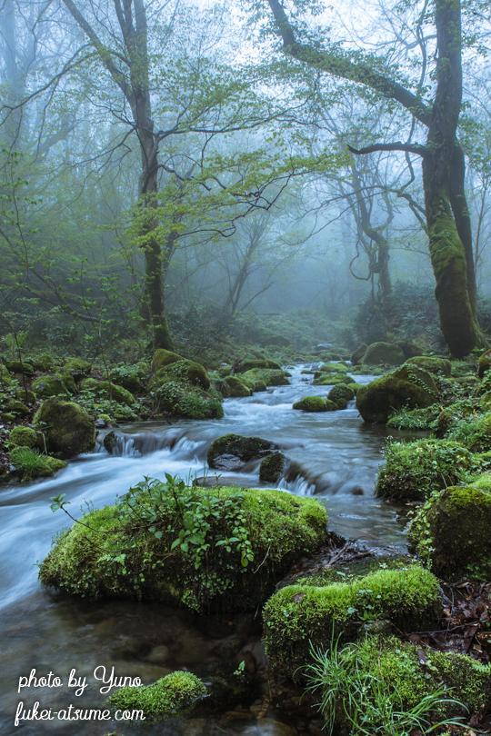 鳥取県江府町・奥大山・木谷沢渓流・霧・渓谷・奥大山の天然水1