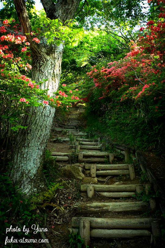 奈良・御所市・大和葛城山・ヤマツツジ・ツツジ・初夏の山道・登り道・階段