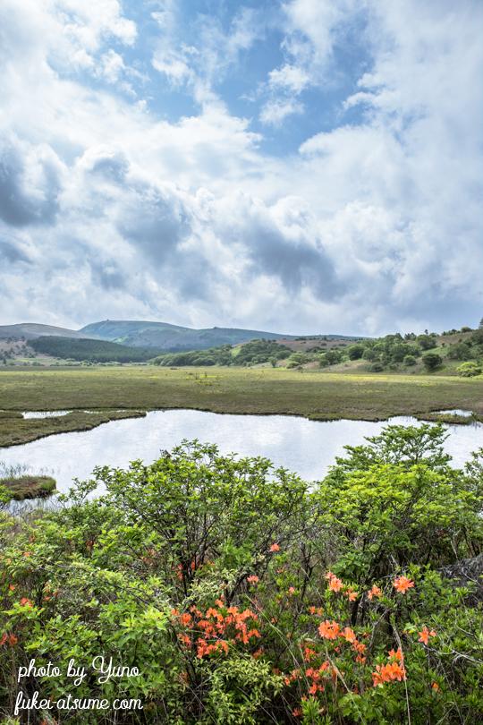 長野県下諏訪町・八島湿原・レンゲツツジ・6月・梅雨2