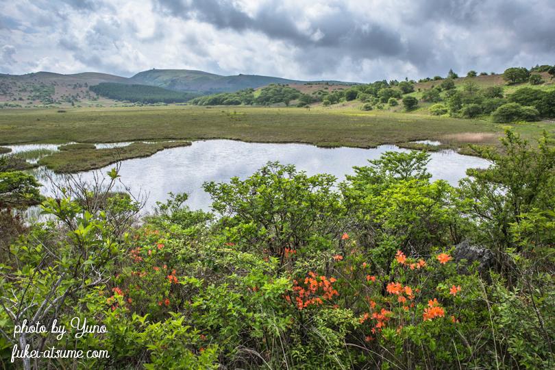 長野県下諏訪町・八島湿原・レンゲツツジ・6月・梅雨1