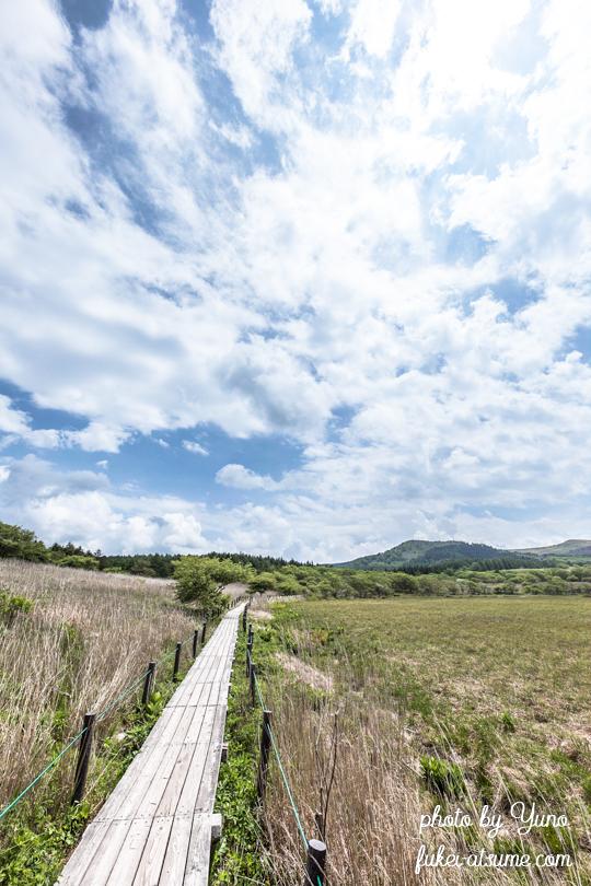 長野県下諏訪町・八島湿原・6月・梅雨の晴れ間・散策路・木道