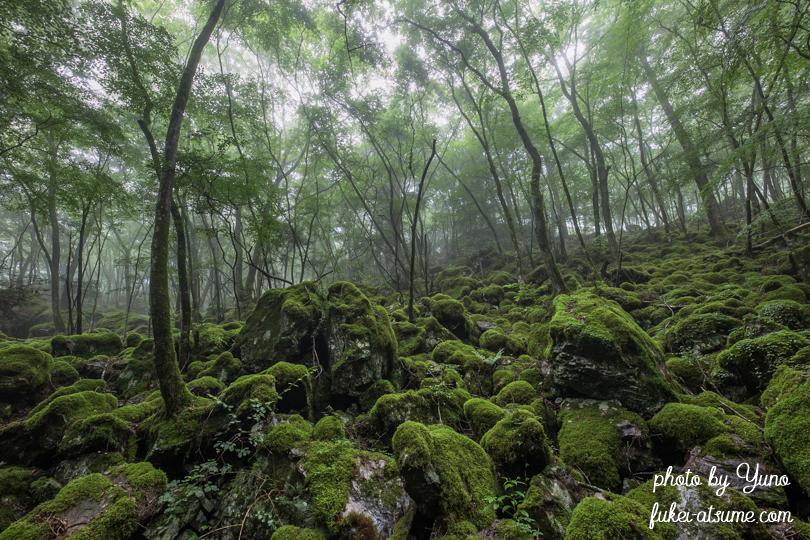 徳島県上勝町・山犬嶽・ミズゴケ・苔の森・苔の楽園・緑・梅雨・霧・moss4