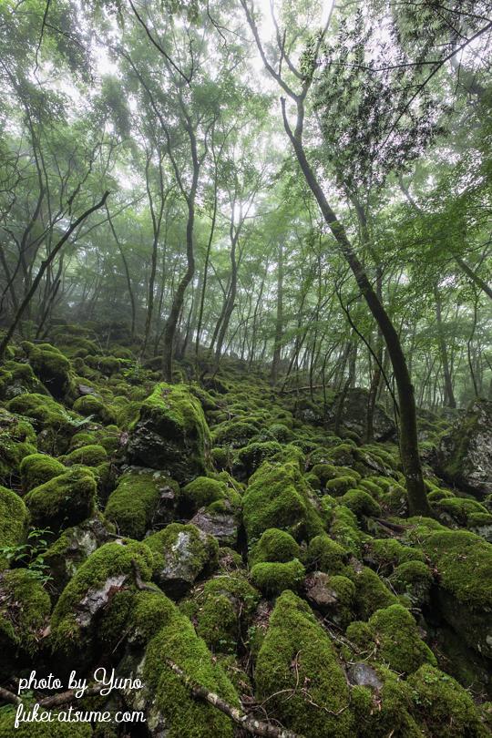徳島県上勝町・山犬嶽・ミズゴケ・苔の森・苔の楽園・緑・梅雨・霧・moss1