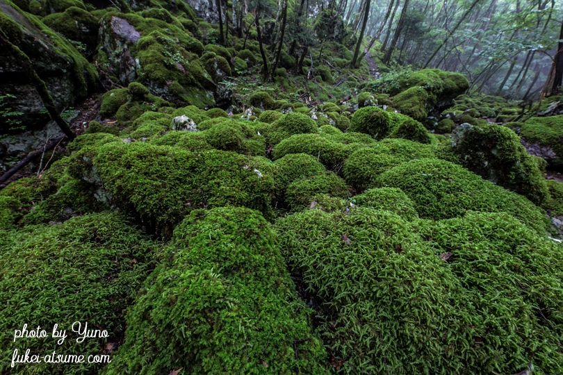 徳島県上勝町・山犬嶽・ミズゴケ・苔の森・苔の楽園・緑・梅雨・moss2