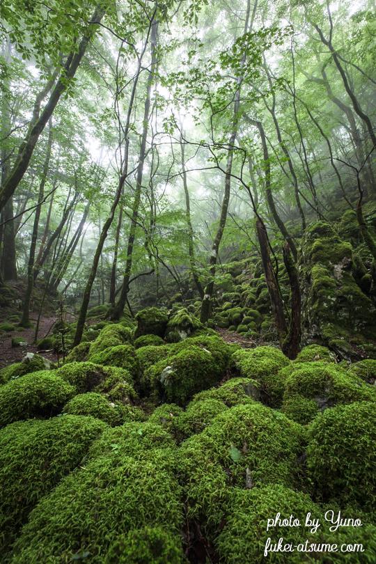 徳島県上勝町・山犬嶽・ミズゴケ・苔の森・苔の楽園・緑・梅雨・霧・moss5