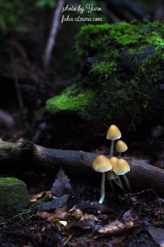 きのこ・菌類・森の妖精・ひっそりと