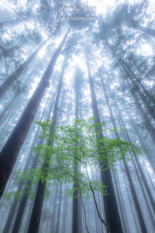 霧の森・雨霧・霧と光・緑・朝霧・幻想の森・深い霧