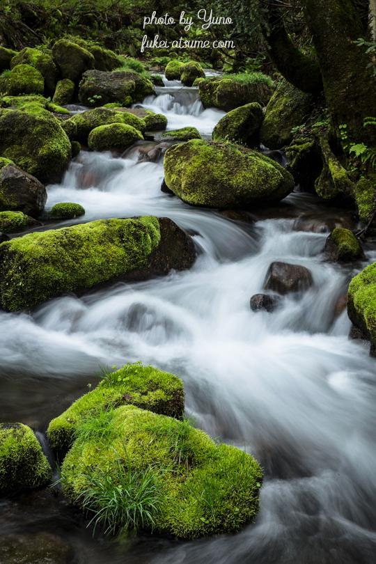 鳥取県江府町・奥大山・木谷沢渓流・渓谷・奥大山の天然水4