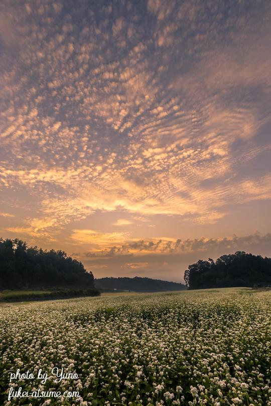 奈良・笠の蕎麦畑・朝焼け・夜明け前・秋雲・鱗雲