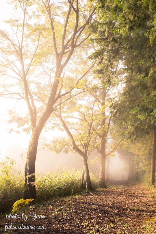 霧・朝陽・光・陽射し・道・秋・霧の輝く朝に