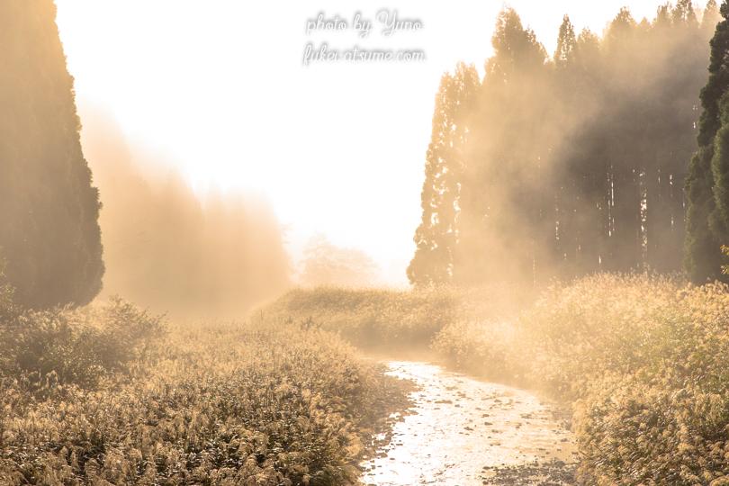 川・霧・ススキ・秋・朝の光・濃霧