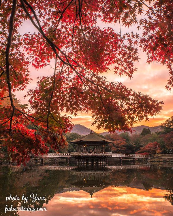 奈良公園・浮見堂・鷺池・秋・紅葉・早朝・朝焼け