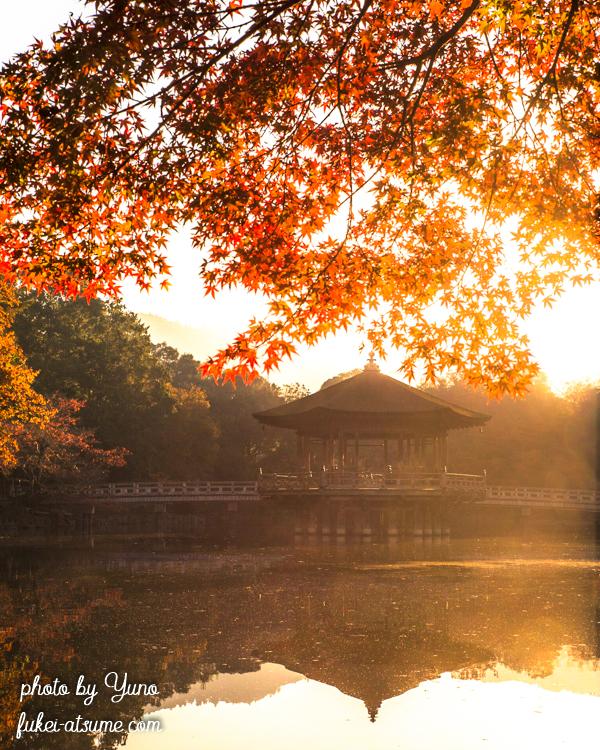 奈良公園・浮見堂・鷺池・秋・紅葉・早朝・朝陽