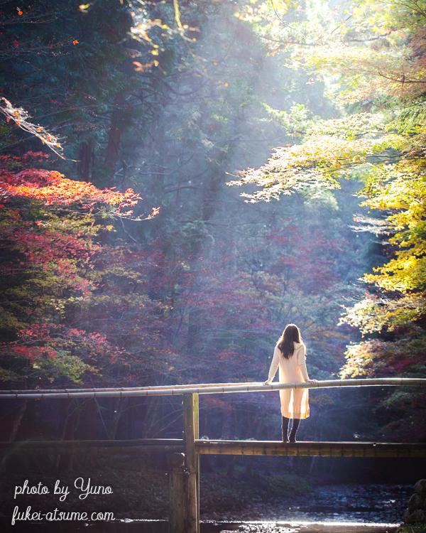 静岡県周智郡森町一宮・小國神社・小さな木の橋・光芒・紅葉・ドラマ・モデル・絶景6