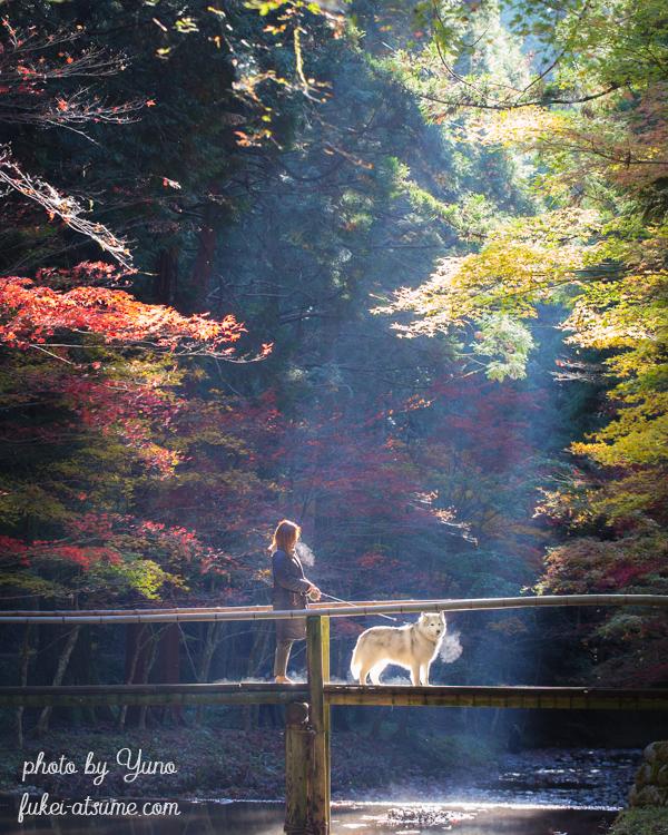 静岡県周智郡森町一宮・小國神社・小さな木の橋・光芒・紅葉・ドラマ・モデル・絶景1
