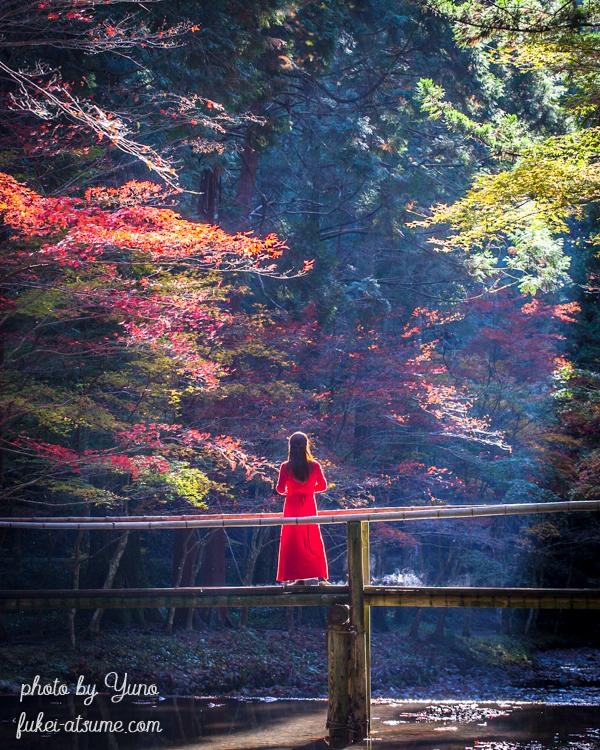 静岡県周智郡森町一宮・小國神社・小さな木の橋・光芒・紅葉・ドラマ・モデル・絶景4