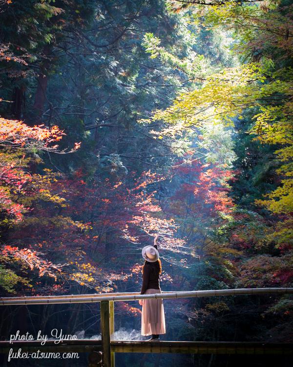 静岡県周智郡森町一宮・小國神社・小さな木の橋・光芒・紅葉・ドラマ・モデル・絶景